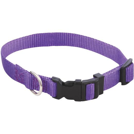 Westminster Pet Ruffin' it Fashion 10 In. to 16 In. Nylon Dog Collar